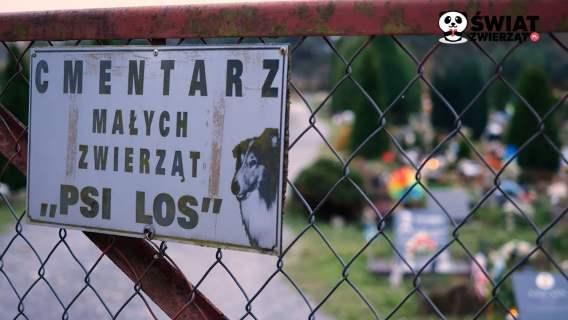 Jak pożegnać się z pupilem? O najstarszym cmentarzu dla zwierząt w Polsce